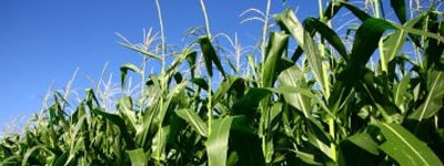 My pick for rising farm commodity prices is Deere; adding it to Jubak Picks Portfolio